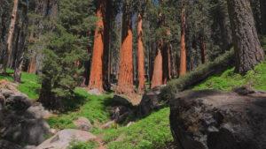 常緑針葉樹