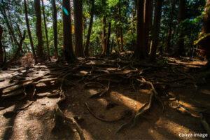 鞍馬山と怖い歴史